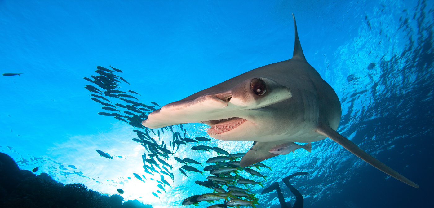 sharks worth more alive than dead