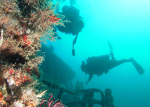 Best Scuba Diving in Fort Lauderdale